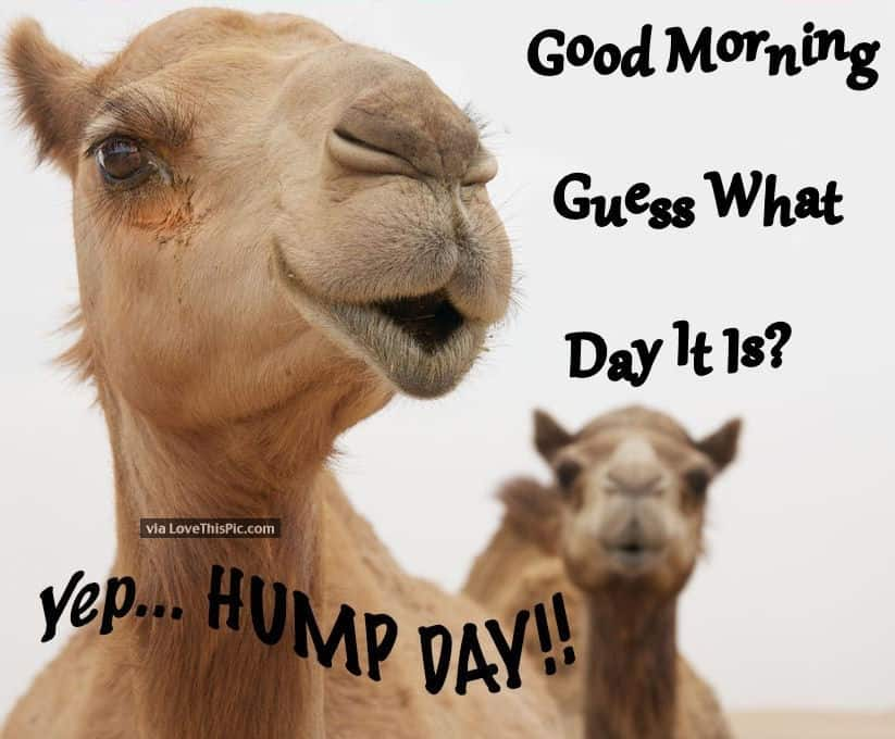 You are currently viewing So What's YOUR Hump Day?